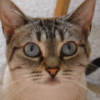 mushi face