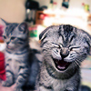 Laughing Kitty