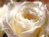 stryphe1 userpic