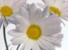 thisismydance userpic