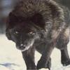 spirit_wolf userpic