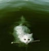 Kathy: Swimming Cat