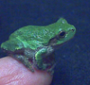 frogg_y