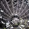grand_weaver userpic