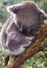 koala85 userpic
