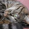 gtdanna userpic