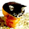 kitty in flowerpot