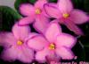 ya_irina userpic