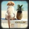 Puppy chillin
