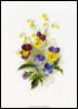 Flowers - Heartsease and Wormwood