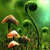 aspidium userpic