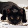 onyx_feline userpic