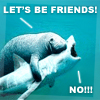 manatee/shark - let's be friends-NO!