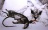 insanitycat userpic
