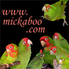wild_parrots userpic