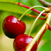 CherryBlum