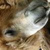 cea camel shaken