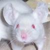mousetastic userpic