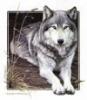 wwolfness userpic
