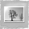 xpapertigerx userpic