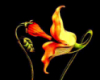 mantis, flores