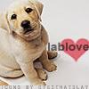 lab love