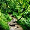 1 / Trail