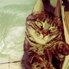 Sofy: Family Doyle -- lazy kitty