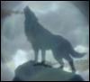 storm_fox userpic