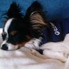 dartagnan_puppy userpic