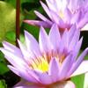 nyagoc userpic
