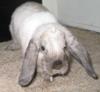 jiji_the_bunny userpic