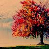 Autumn :: Stock