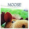 Cute - Moose!