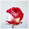 sunshine267 userpic
