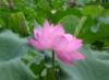 adazheng10y userpic