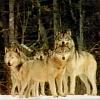 Pack - Family