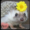 Hedgehog wif flower
