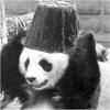 a panda: hey it's a panda.