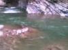 очерет, що мислить: спокійна річка