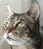 ripley-the-cat