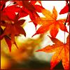 Silke: autumn