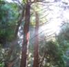 trees at Kasuga Taisha, Nara