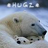 Beth H: Bears Hugz (rexluscus)