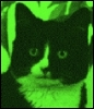 Tom the Alien Cat: little green man feline