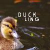 littleuglyducky userpic