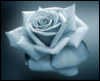 flaming_rose userpic