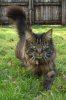 feline familiars (Susie, Rosie Whiskas & Tobacco)