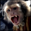 Jack the Monkey posting in Pirates of the Caribbean: DMC Alternative