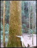 ginsengstar555 userpic